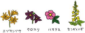 別海の花たち